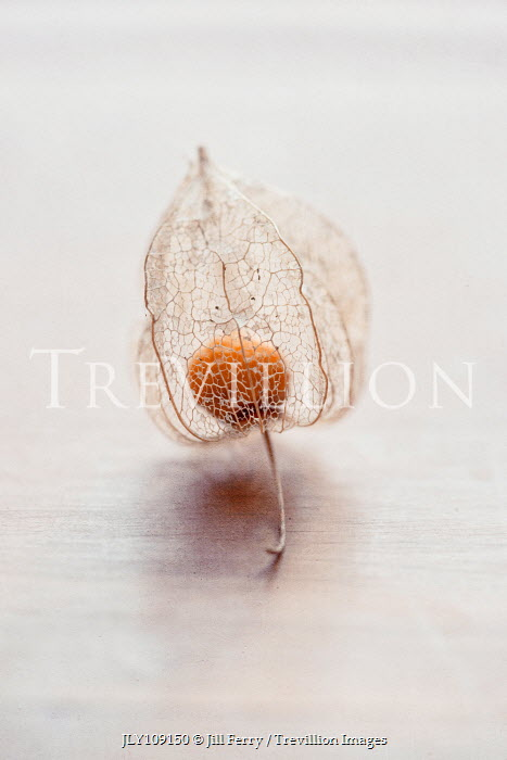 Jill Ferry CLOSE UP OF PHYSALIS FRUIT Miscellaneous Objects