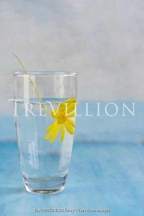 Jill Ferry YELLOW FLOWER IN GLASS OF WATER Flowers