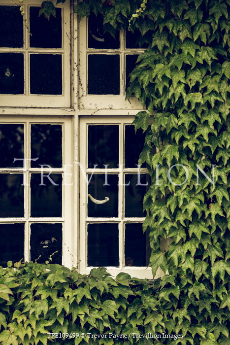 Trevor Payne Window with ivy growing Building Detail