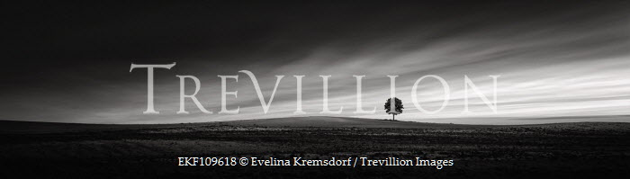 Evelina Kremsdorf Fields
