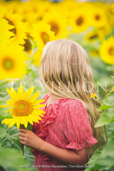 Robin Macmillan BLONDE GIRL HOLDING FLOWING IN SUNFLOWER FIELD Children