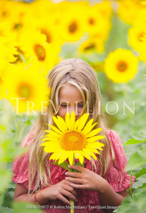 Robin Macmillan BLONDE GIRL HOLDING FLOWER IN SUNFLOWER FIELD Children