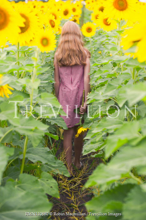Robin Macmillan GIRL IN SUNFLOWER FIELD FROM BEHIND Children