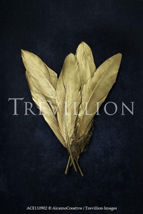 AlcainoCreative Gold feathers on black background