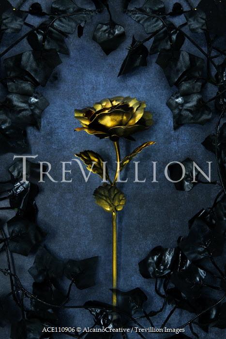 AlcainoCreative Gold rose and black leaves