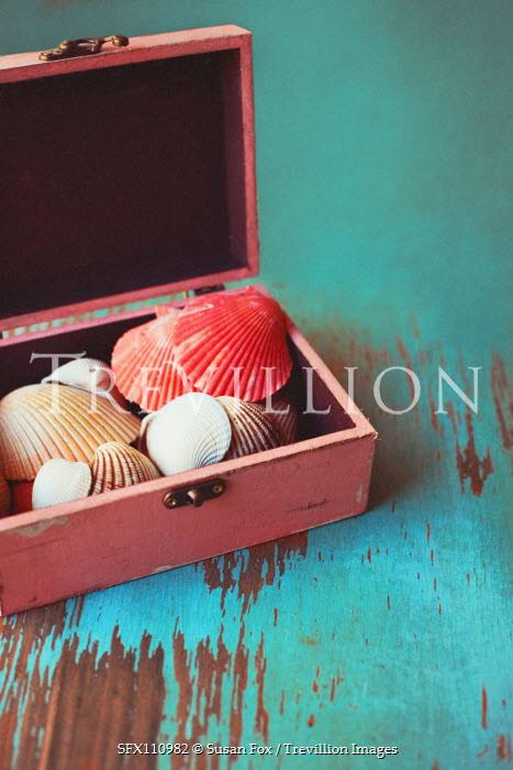 Susan Fox Collection of seashells in box