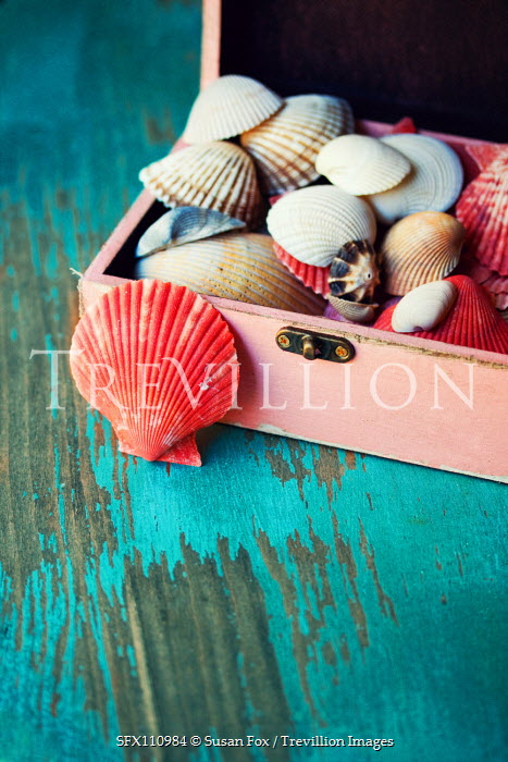 Susan Fox Collection of seashells in box