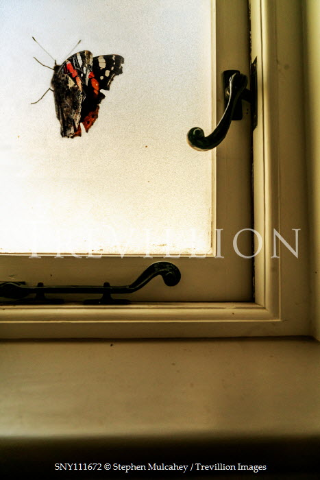 Stephen Mulcahey BUTTERFLY BY WINDOW INSIDE HOUSE Insects