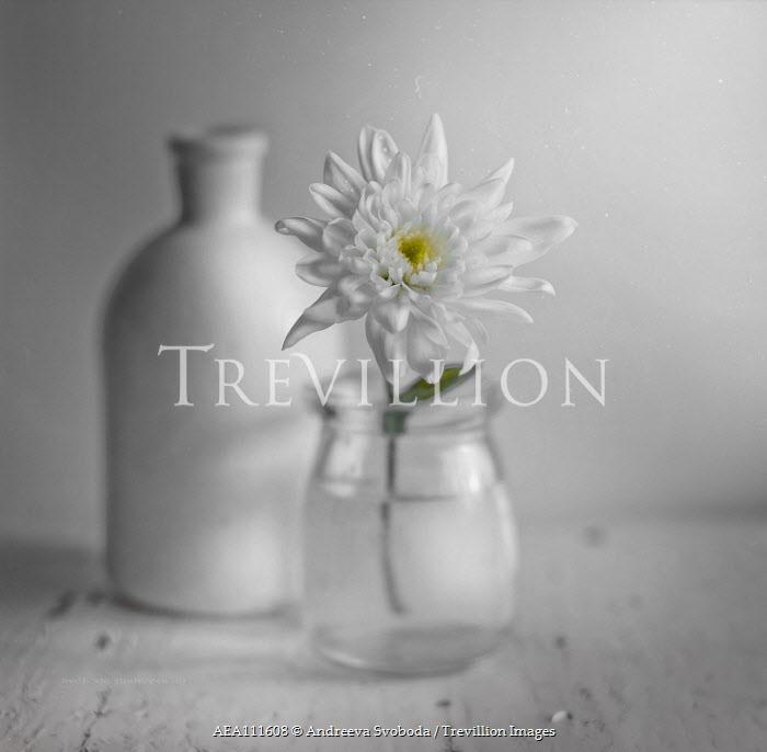 Andreeva Svoboda White flower in glass jar Flowers