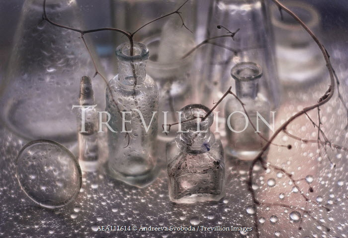 Andreeva Svoboda Twigs in glass bottles with water droplets