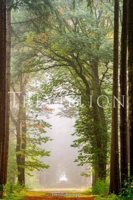 Lars van de Goor EMPTY COUNTRY ROAD WITH TREES IN SUMMER Paths/Tracks