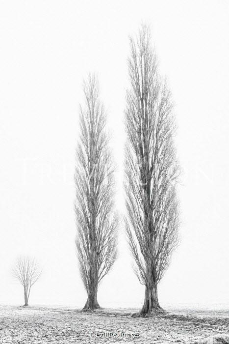 Lars van de Goor TREES IN FIELD IN WINTER Trees/Forest