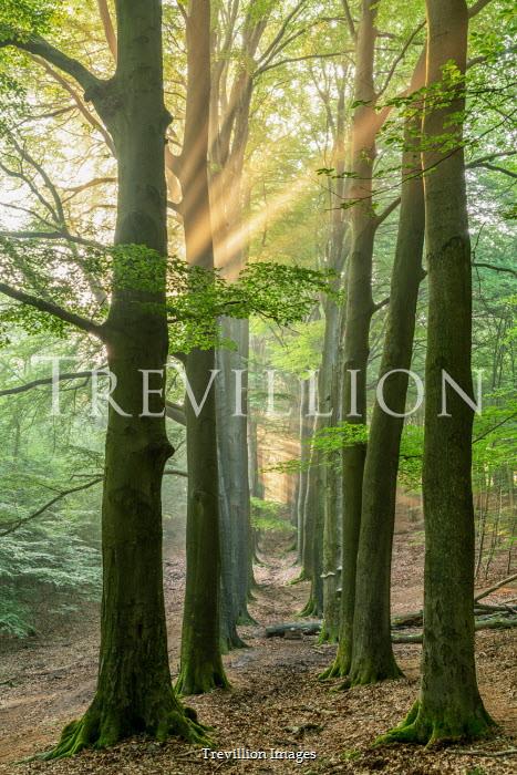 Lars van de Goor LINES OF TREES IN FOREST IN SUMMER Trees/Forest