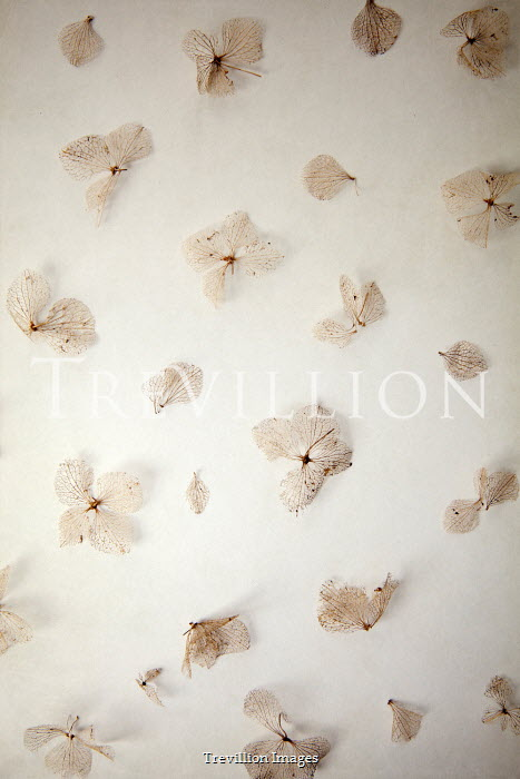 Miguel Sobreira Scattered Dried Hydrangea Flowers Flowers