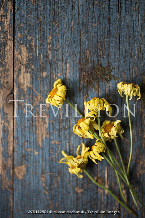 Alison Archinuk WITHERED YELLOW FLOWERS ON TABLE Flowers