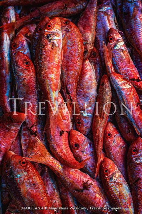 Magdalena Wasiczek close up of red fishes