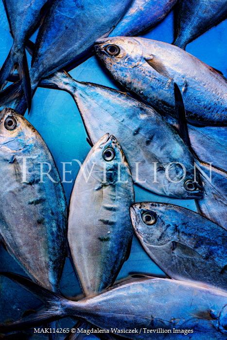 Magdalena Wasiczek close up of silver blue fishes