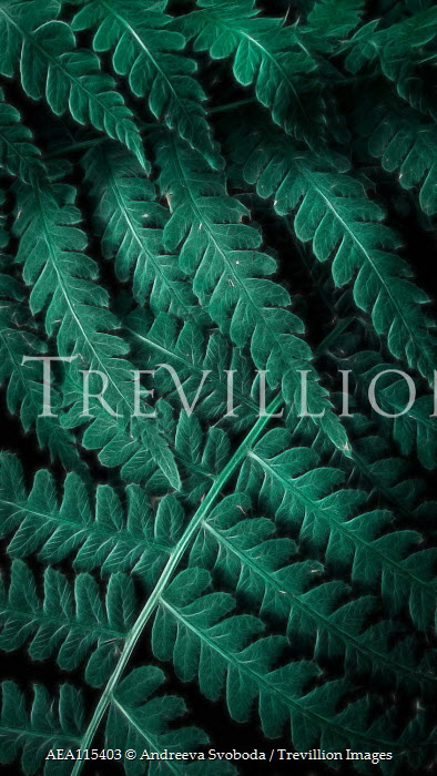 Andreeva Svoboda Close up of fern