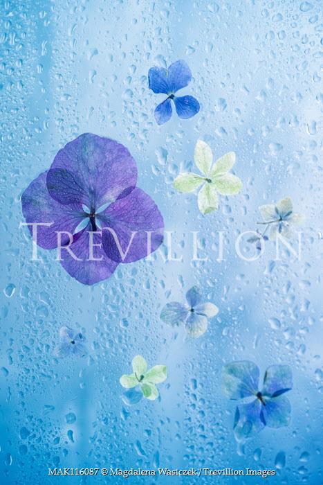 Magdalena Wasiczek Close up of petals on wet glass