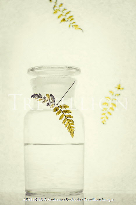 Andreeva Svoboda Fern fronds and water in vase