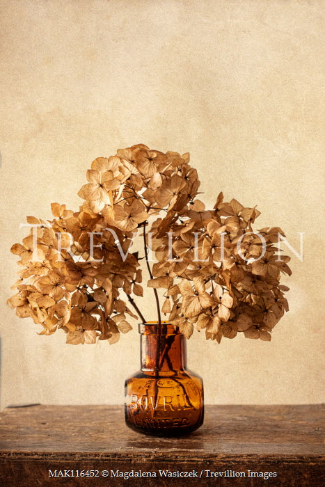 Magdalena Wasiczek dried hydrangea flower in vintage bottle Flowers