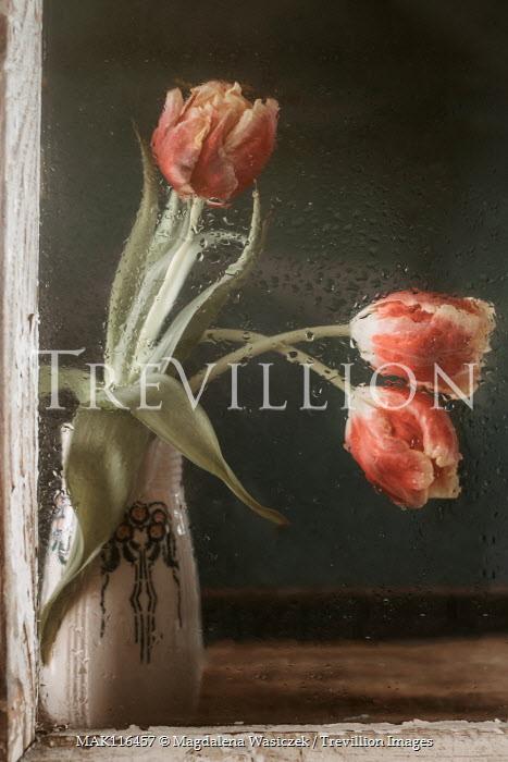 Magdalena Wasiczek tulips in vase behind wet window Flowers