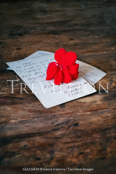 Galya Ivanova Postcards with red flower on wooden table