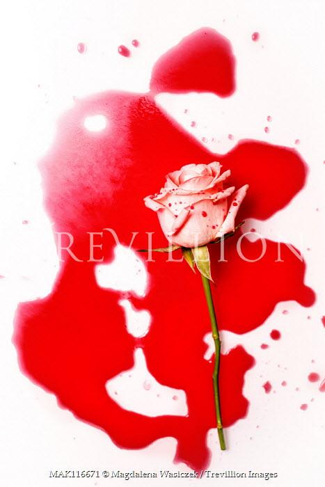 Magdalena Wasiczek rose and blood