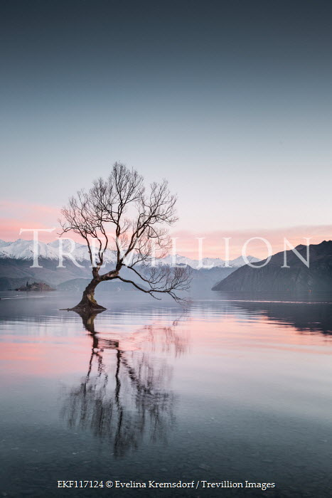 Evelina Kremsdorf REFLECTION OF TREE IN LAKE WITH SNOWY MOUNTAINS Lakes/Rivers