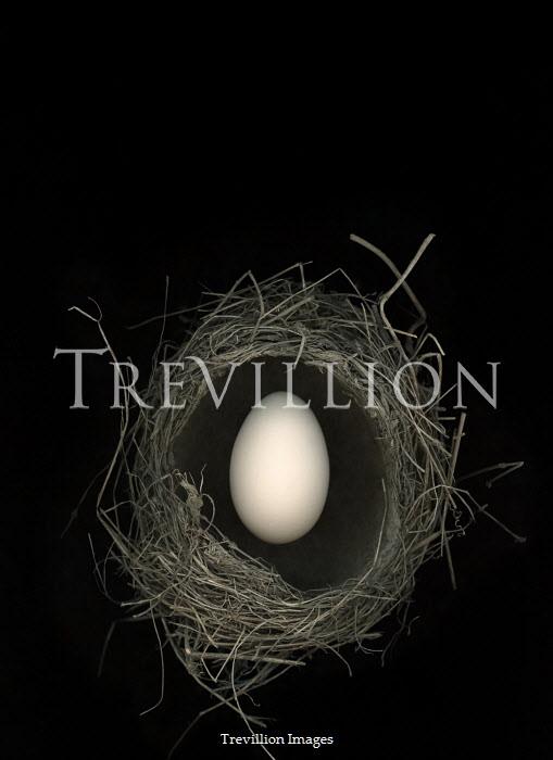 Magdalena Russocka egg in birds nest