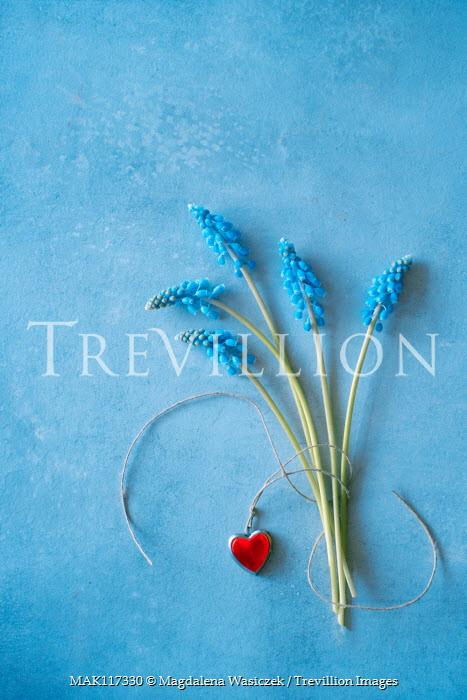 Magdalena Wasiczek blue flowers of muscari and heart-shaped pendant Flowers