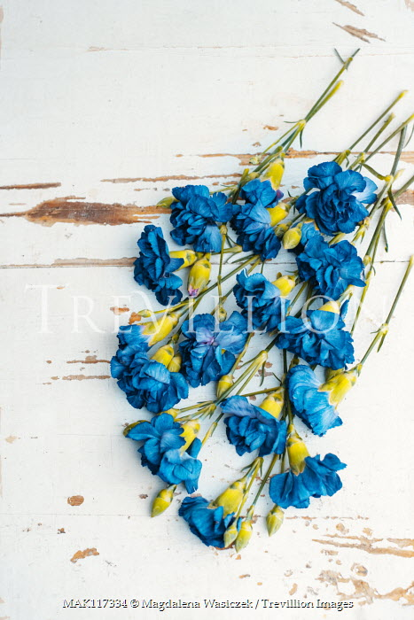 Magdalena Wasiczek bunch of blue flowers on old white table Flowers