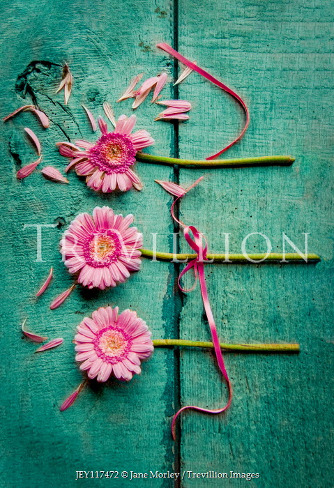 Jane Morley THREE PINK FLOWERS WITH RIBBON AND SCATTERED PETALS Flowers
