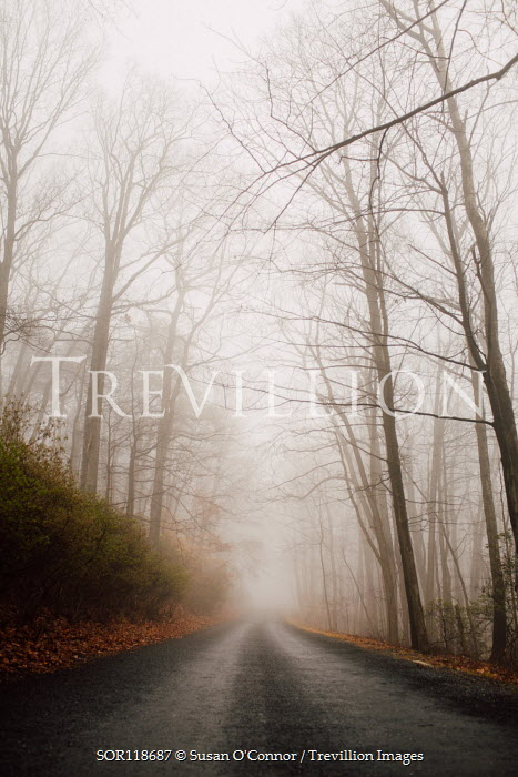 Susan O'Connor EMPTY ROAD IN AUTUMN COUNTRYSIDE Paths/Tracks