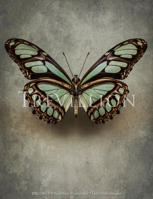 Jaroslaw Blaminsky CLOSE UP OF BEAUTIFUL PATTERNED BUTTERFLY Insects
