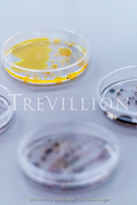 Colin Hutton CLOSE UP OF PETRI DISHES Miscellaneous Objects