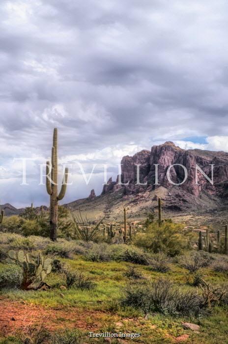 Jill Battaglia CACTI PLANTS WITH MOUNTAINS IN DESERT Desert