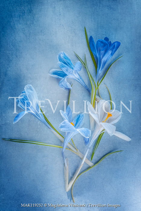Magdalena Wasiczek close up of blue and white flowers Flowers