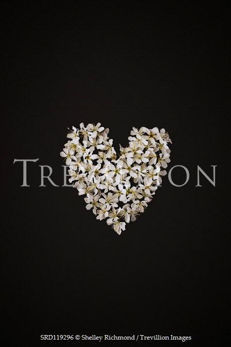 Shelley Richmond WHITE BLOSSOM THE SHAPE OF A HEART Flowers
