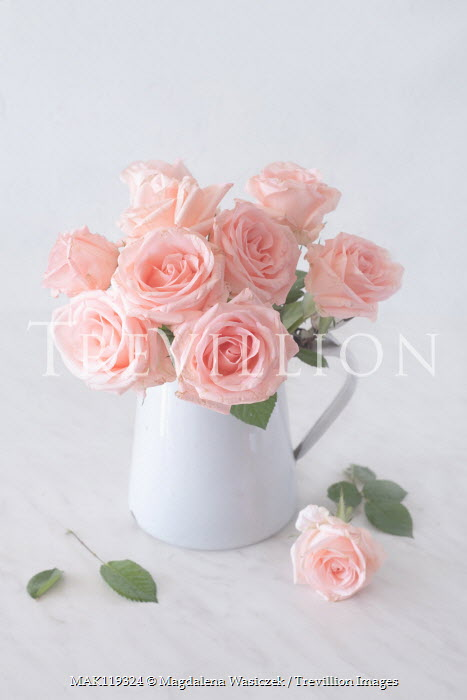 Magdalena Wasiczek pink roses in white jug Flowers