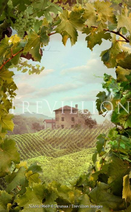 Drunaa House in vineyard