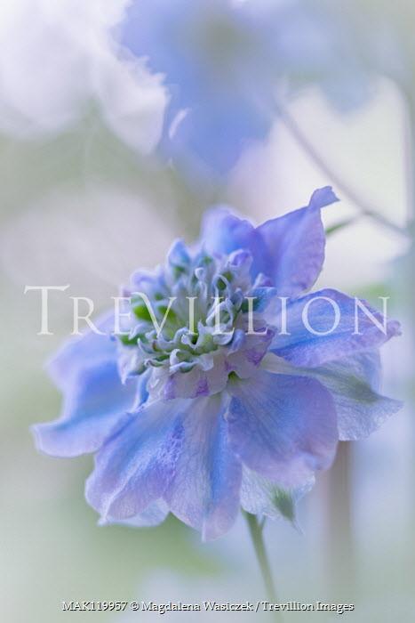 Magdalena Wasiczek close up of blue flower Flowers/Plants