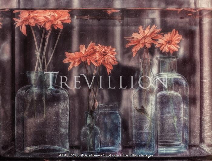 Andreeva Svoboda GLASS BOTTLES WITH FLOWERS IN WATER TANK Flowers