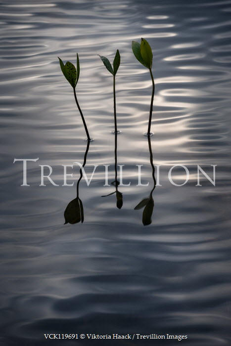 Viktoria Haack THREE STEMS WITH LEAVES IN WATER Lakes/Rivers