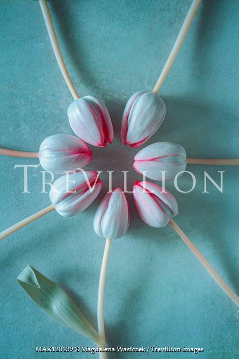 Magdalena Wasiczek circle of tulips Flowers