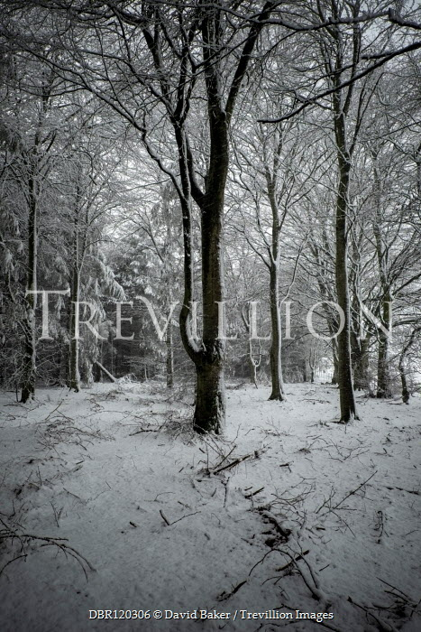 David Baker EMPTY FOREST WITH SNOW Trees/Forest