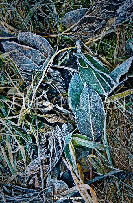 Magdalena Wasiczek frosty leaves from above Flowers/Plants