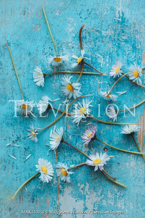 Magdalena Wasiczek scattered daisies Flowers