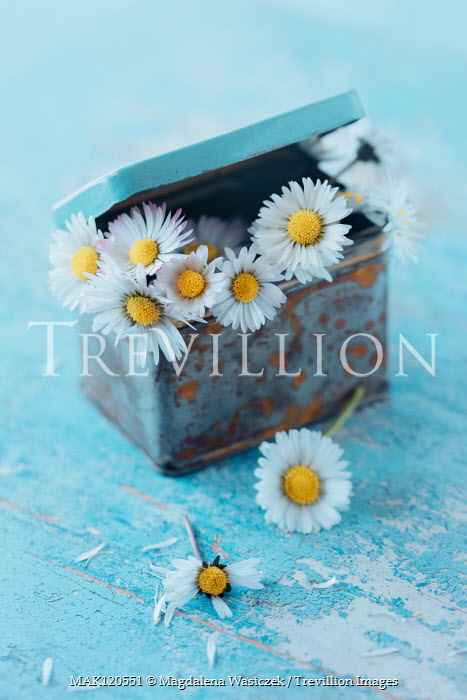 Magdalena Wasiczek daisies in small rusty metal box Flowers