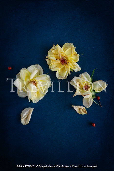 Magdalena Wasiczek three wilting roses from above Flowers
